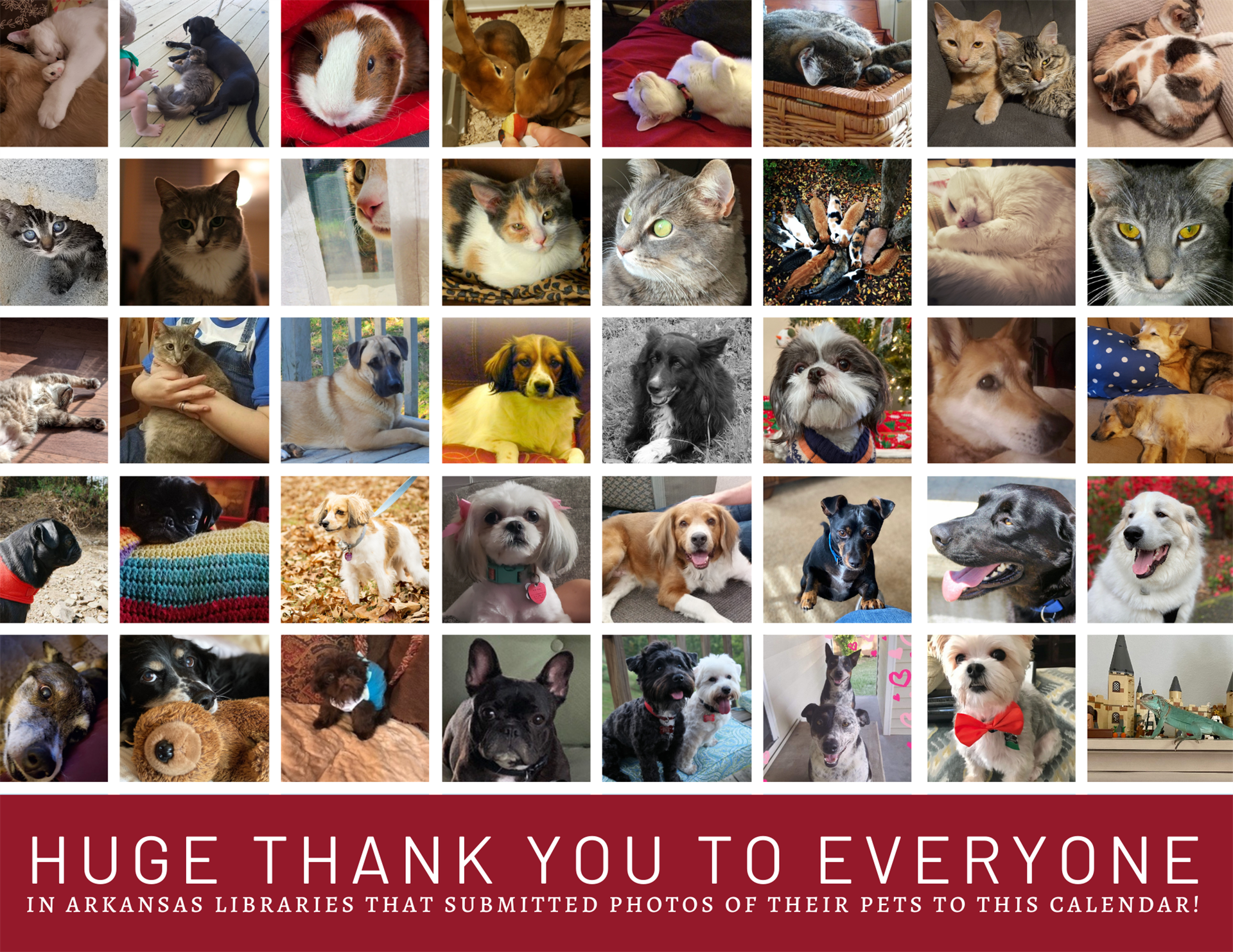 Pets of ArLA thank you page.
